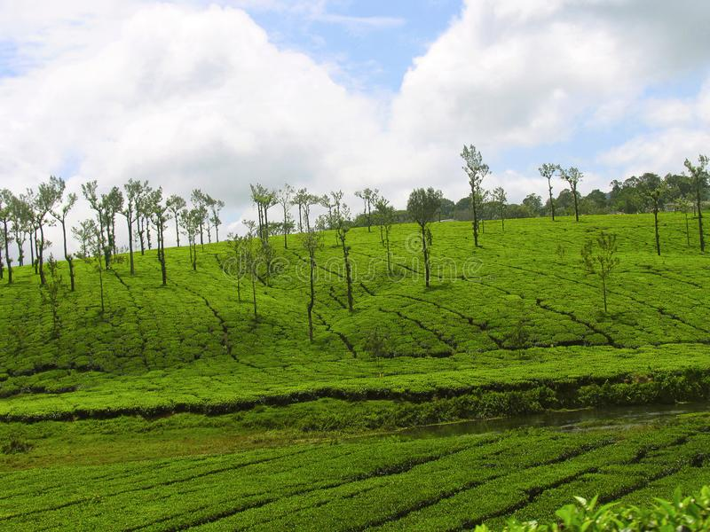 Tea Estate on Nelliyampathy Hill, Palakkad, Kerala, India. Tea Estate on Nelliyampathy Hill, Palakkad, Kerala from India stock photos