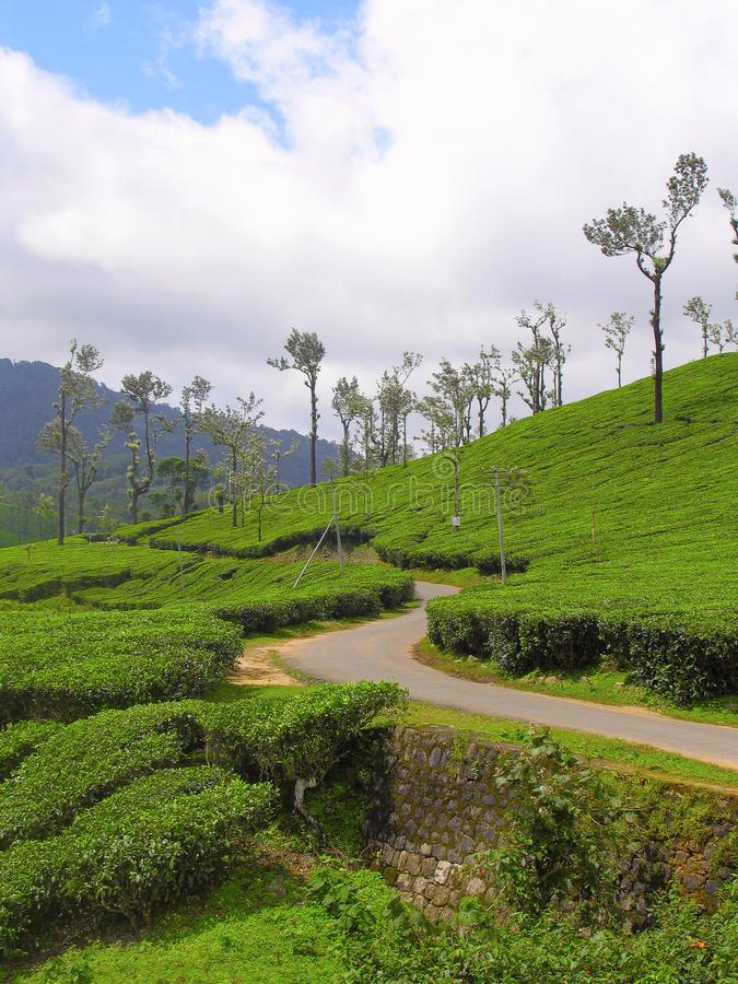 Tea Estate on Nelliyampathy Hill, Palakkad, Kerala, India. Tea Estate on Nelliyampathy Hill, Palakkad, Kerala from India royalty free stock image