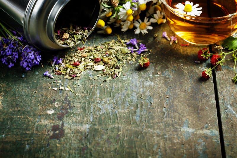tea för glass växt- för horsetail för fokus för arvensekoppequisetum selektiv naturmedicin för avkok royaltyfri bild