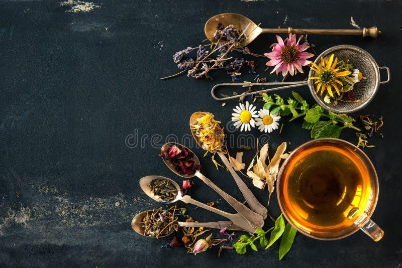 tea för glass växt- för horsetail för fokus för arvensekoppequisetum selektiv naturmedicin för avkok