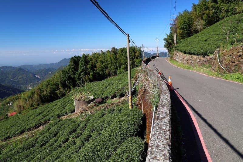 Tea farm road stock photography