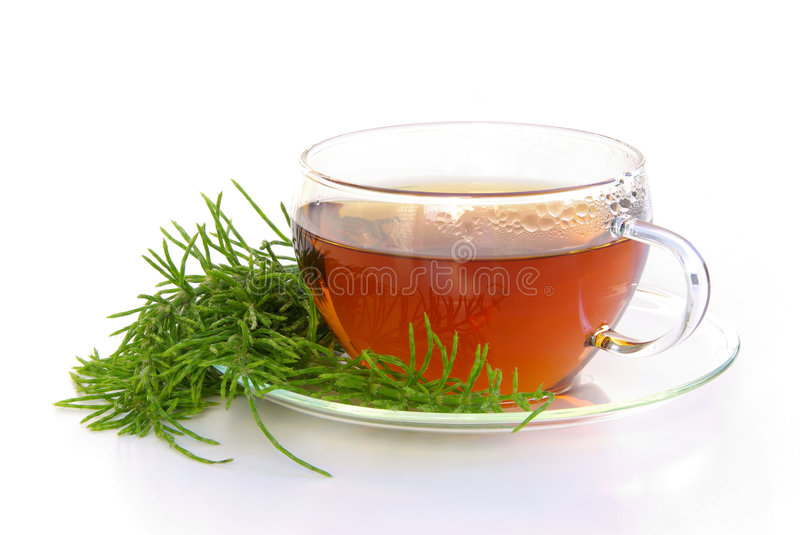 Tea field horsetail stock image
