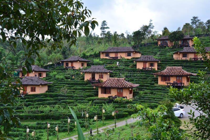 Tea Fields in Moo Ban Rak in Thailand royalty free stock photo