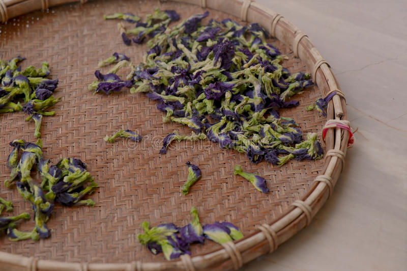 Tea flower royalty free stock photo