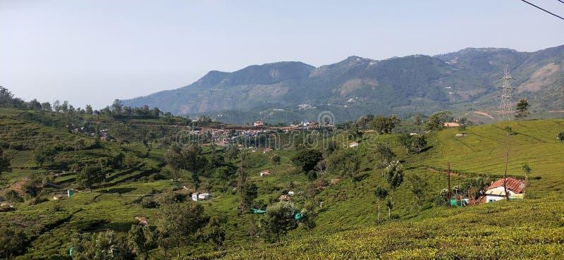 Tea garden hills in Kotagiri stock photography