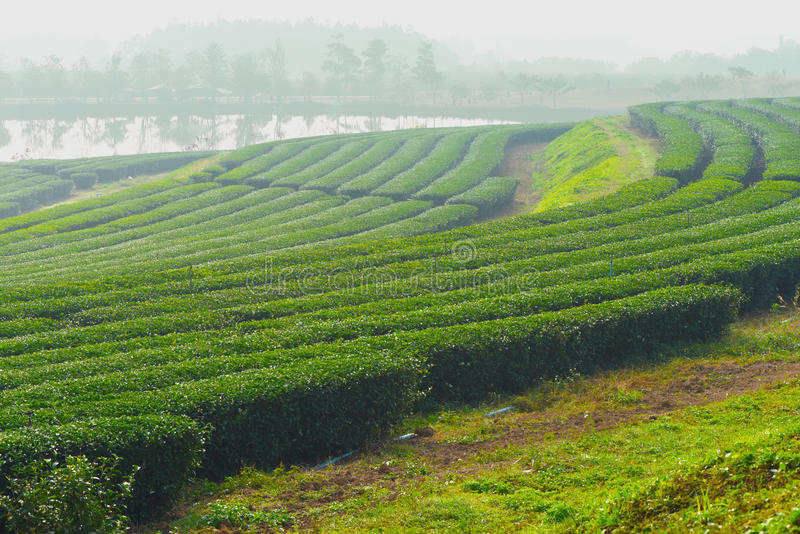 Tea Garden. A garden in which tea and other refreshments are served to the public stock images