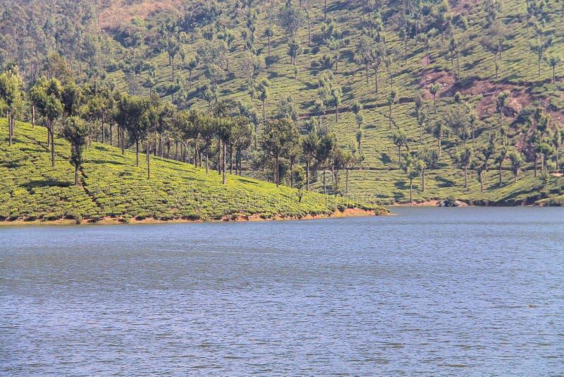 Tea Gardens at Munar stock image