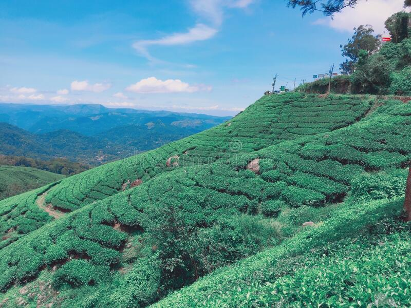 Tea Gardens of Munnar stock photo. Image of munnar, chair ...
