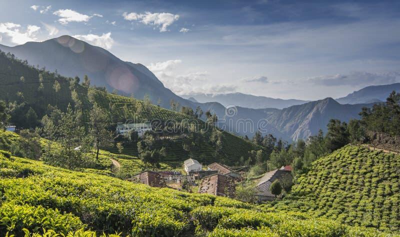 Tea gardens in Munnar, Kerala, India royalty free stock images