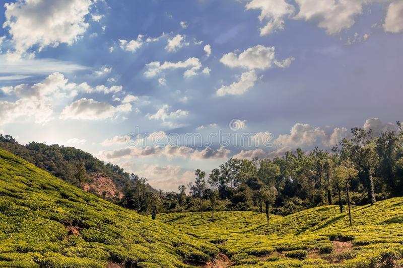 Tea gardens at ooty hill station with beautiful clouds. Tea gardens at ooty hill stations beautiful sunset background and clouds surrounded stock photos