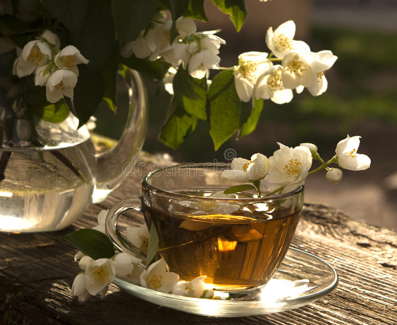 Download Tea and jasmine stock photo. Image of healthy, closeup - 14850960