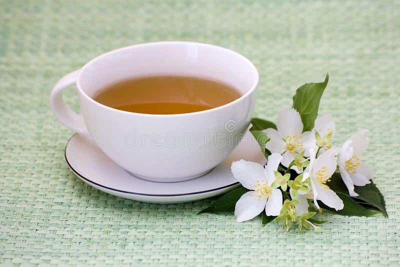 Tea of jasmine stock images