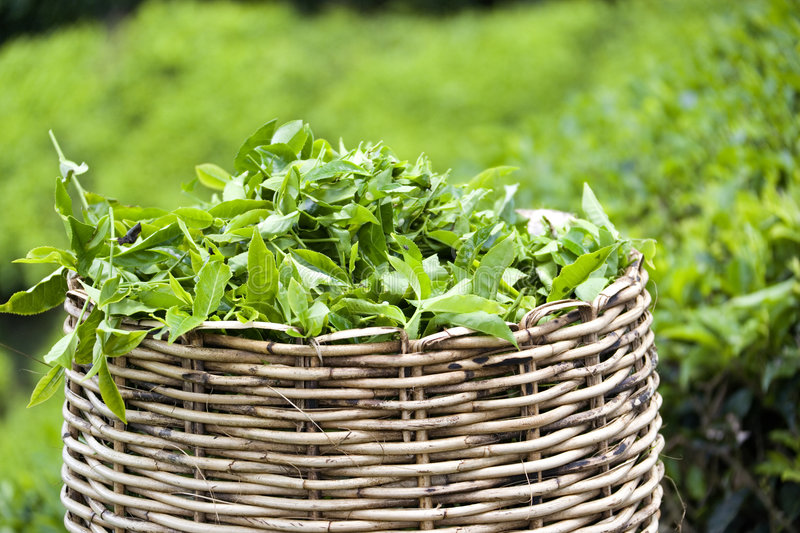 Tea Leaf Basket stock photo