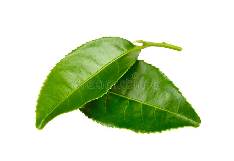 Tea leaf isolated on the white background.  royalty free stock photo