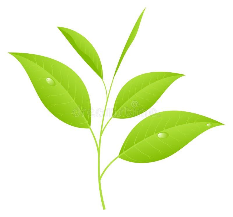 Download Tea Leaves Stock Image - Image: 14653321