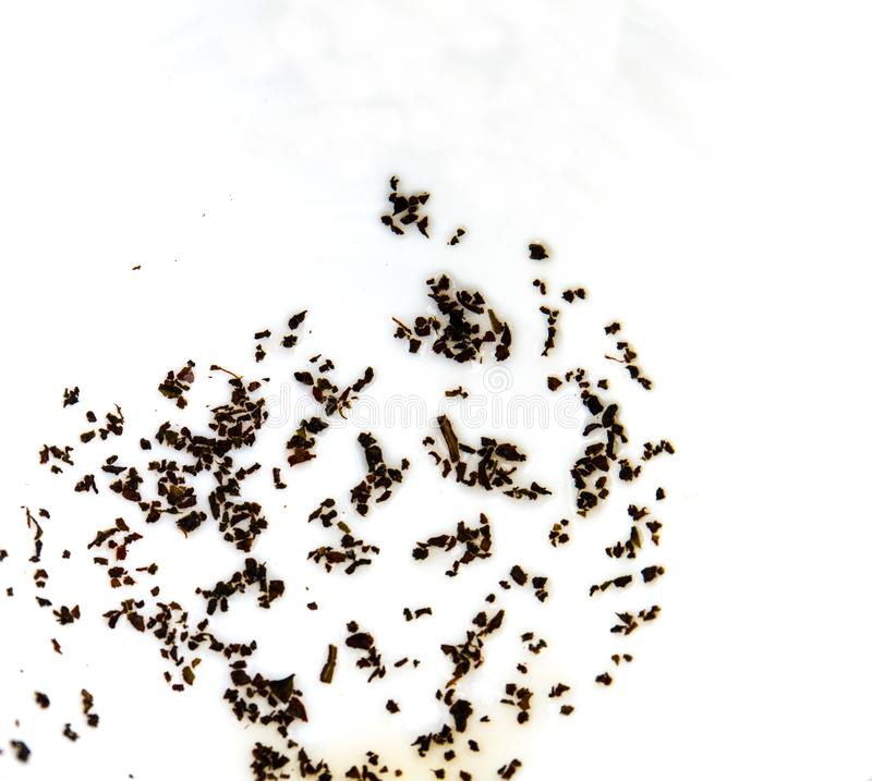 Tea leaves at the bottom of a white cup royalty free stock photography