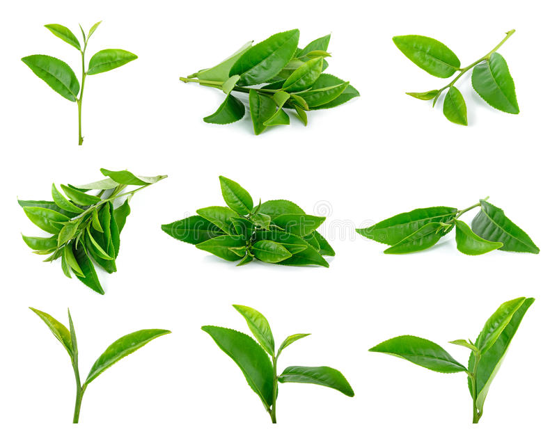 Tea leaves isolated on the white background.  stock photo