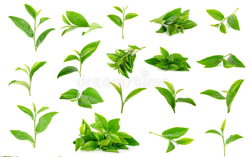 Tea leaves isolated on the white background.  stock image