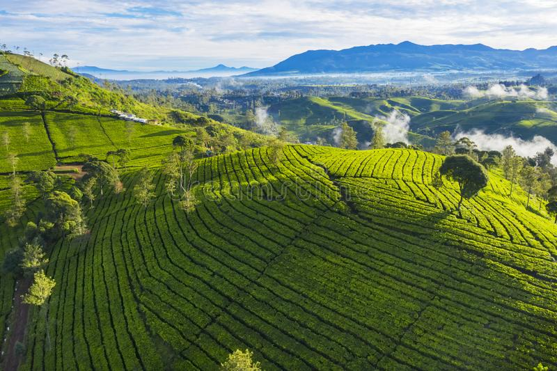 Tea leaves plantation at morning time. Aerial view of tea leaves plantation with fog at morning time in Bandung, Indonesia stock images