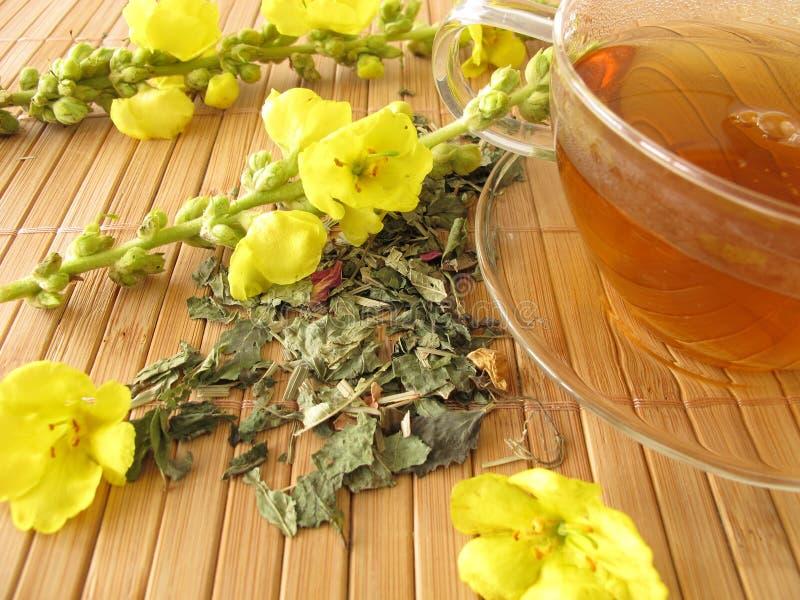 Tea med mulleinblommor fotografering för bildbyråer