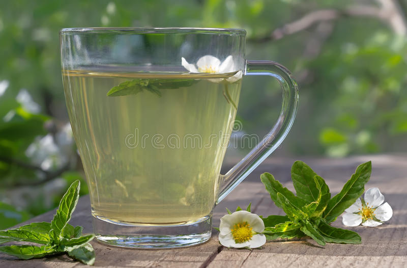 Tea with mint. Mint tea with green leaves served on the terrace royalty free stock image