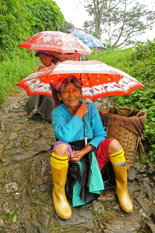 Tea pickers, Darjeeling, India