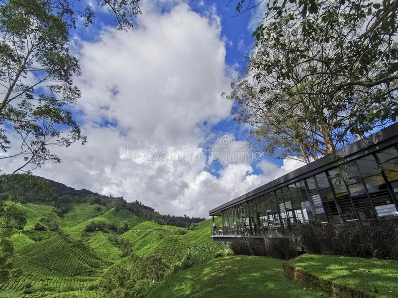 Tea plantation and cafe terrace in Cameron Highlands, Pahang, Malaysia.  royalty free stock image