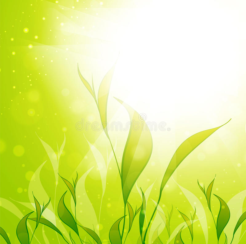 Download Tea Plantation Leaves Stock Photo - Image: 31024740