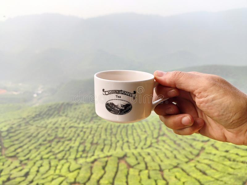 Tea plantations in Cameron Highlands, Malaysia stock photos