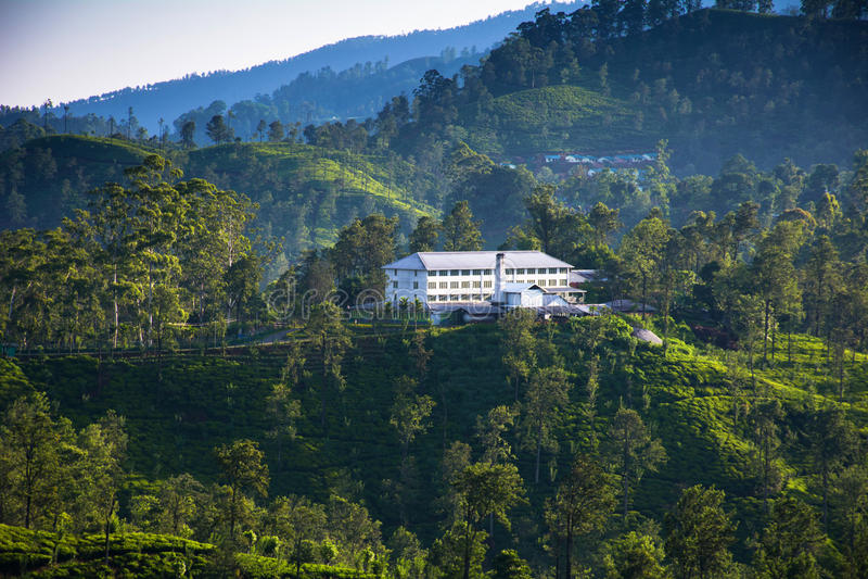 Tea plantations in Ella, Sri Lanka. A tea factory surrounded by tea plantations in Ella, Sri Lanka royalty free stock photo