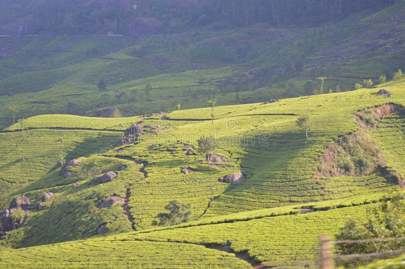 Tea plantations in India with beautiful landscape. This is place in India called Munnar is an attractive destination with the world`s best and renowned tea stock image