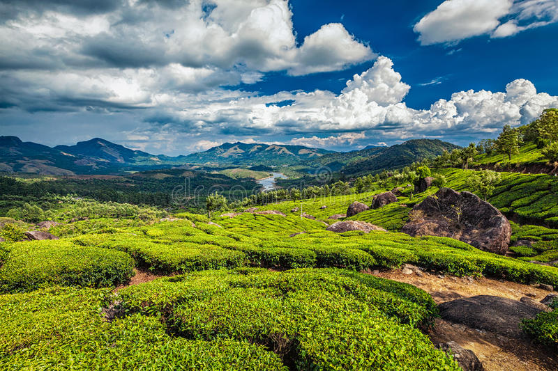 Tea plantations and river in hills, Kerala, India. Tea plantations and Muthirappuzhayar River in hills near Munnar, Kerala, India stock photo