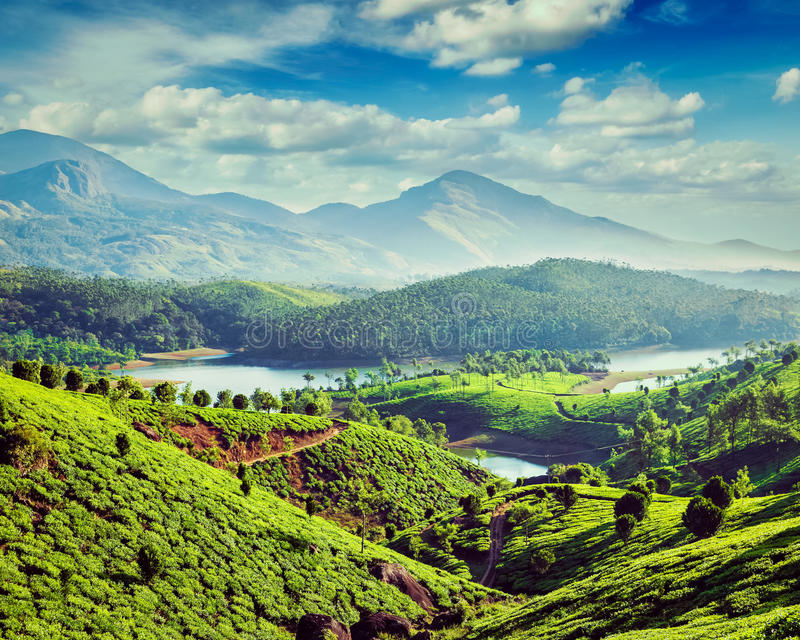 Tea plantations and river in hills near Munnar, Kerala, India. Vintage retro effect filtered hipster style image of tea plantations and Muthirappuzhayar River in stock photos