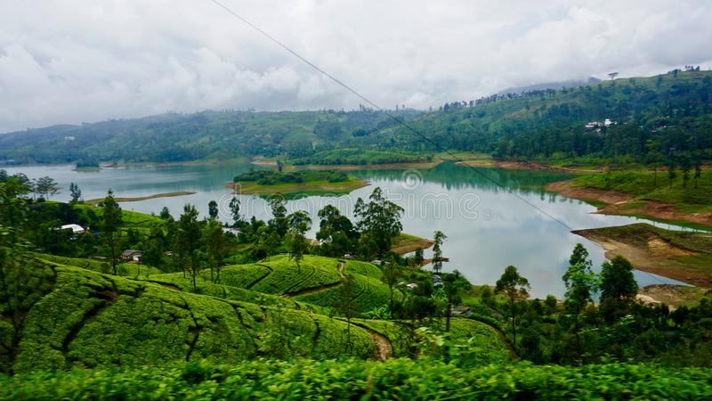 Tea plantations in Sri Lanka, Ella. Tea plantation and a lake in Ella, Sri Lanka in the middle of April on a rainy day stock images