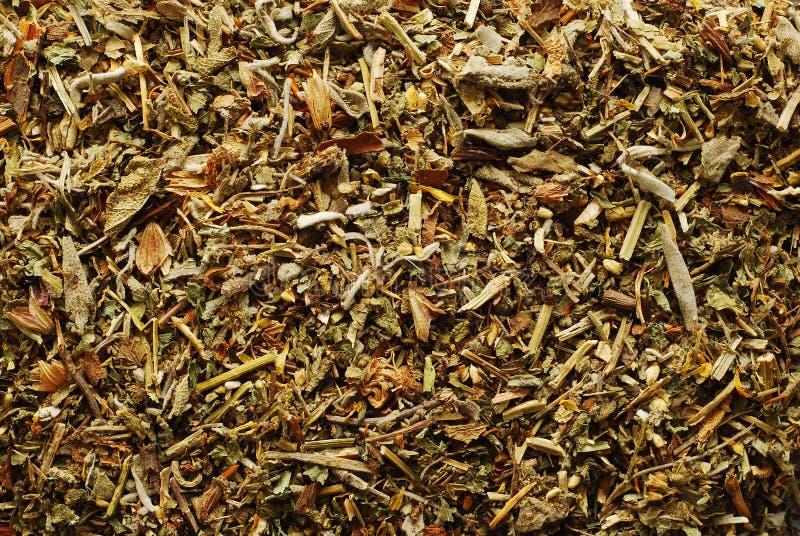 Tea plants royalty free stock photography