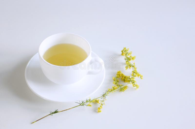 Tea in porcelain mug on white background with galum verum, lady`s bedstraw or yellow bedstraw. Galum verum is a herbaceous perenn. Ial plant,when used externally royalty free stock photos