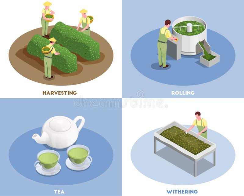 Tea Production Isometric Concept stock illustration