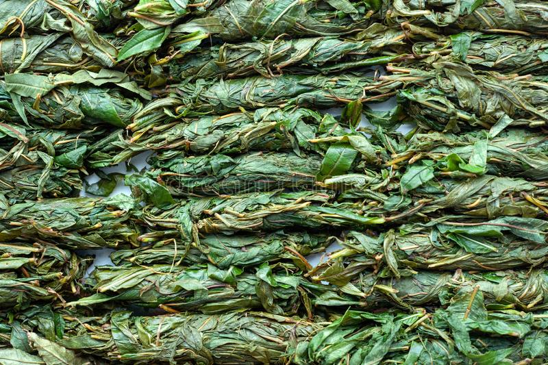 Tea production process. Tea leaf twisted by hand. Blooming Sally fermentation. Blooming Sally fermentation. Tea production process. Tea leaf twisted by hand royalty free stock images