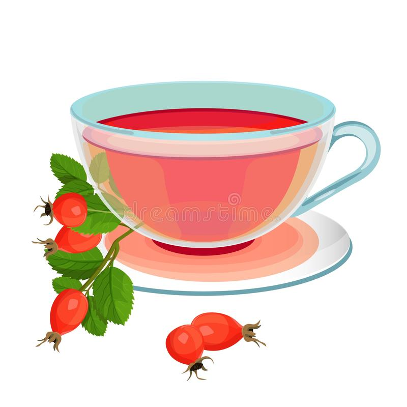 Tea with rose hips in transparent glass and saucer. Tea with rose hips in transparent glass mug and saucer. Briar branch with green leaves and cup of hot vector illustration