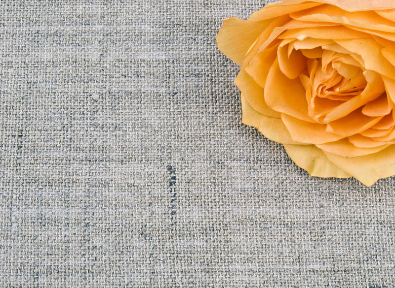 Tea rose on linen background