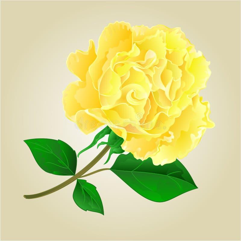 Tea rose vector. Twig tea rose stem with leaves vector illustration royalty free illustration