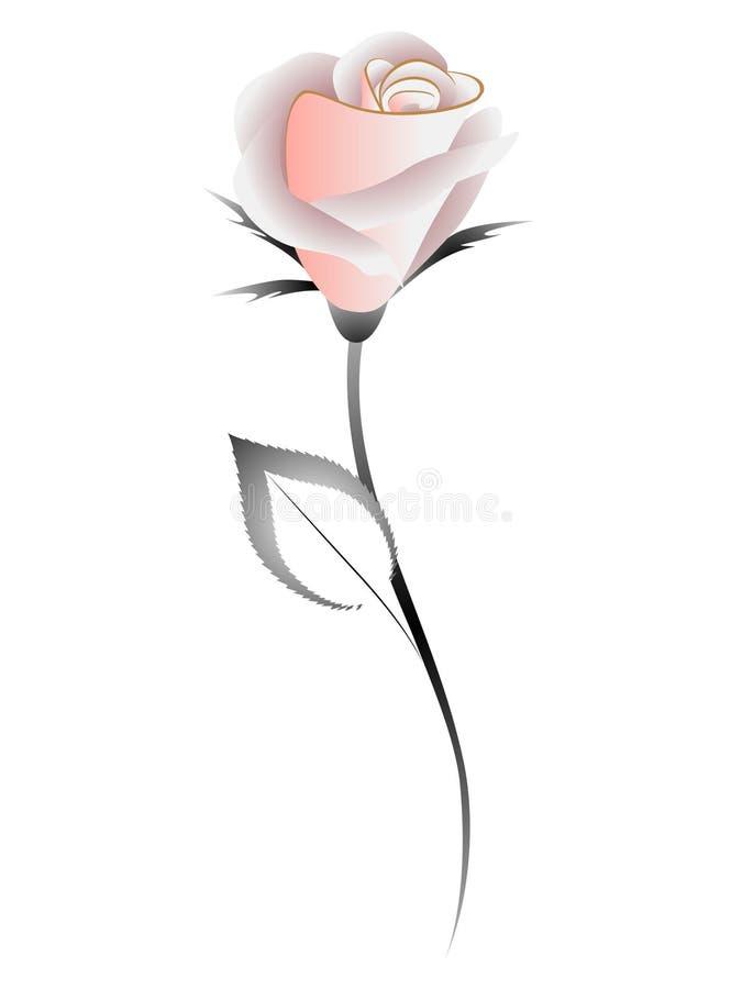 Tea rose on a white background, design element. Tea rose on a white background, design element beautiful illustration stock illustration
