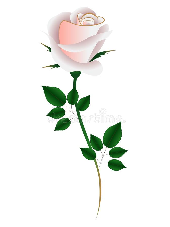 Tea rose on a white background. Tea rose on a white background, element for design, beautiful illustration royalty free illustration
