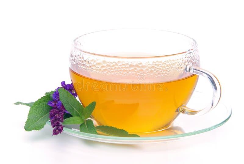 Download Tea sage stock image. Image of drink, leaves, bush, medicinal - 11406705