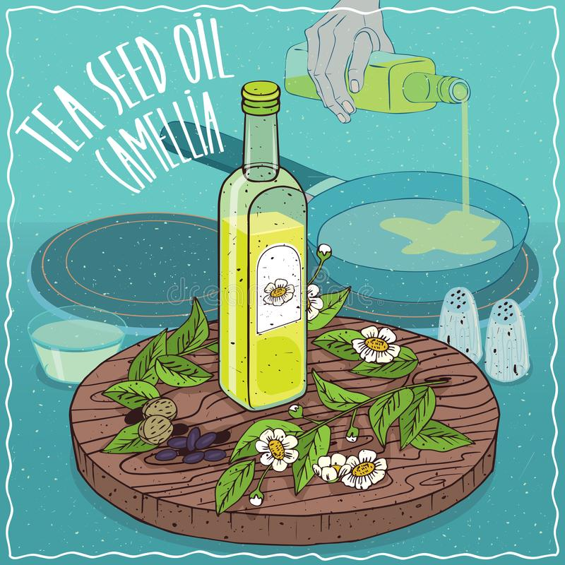 Tea seed oil used for frying food. Glass bottle of Tea seed oil and Camellia oleifera plant. Hand pouring oil on frying pan. Natural vegetable oil used for stock illustration