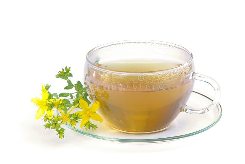 Tea St Johns wort 01. Tea St Johns wort, herbal infusion, tisane royalty free stock image