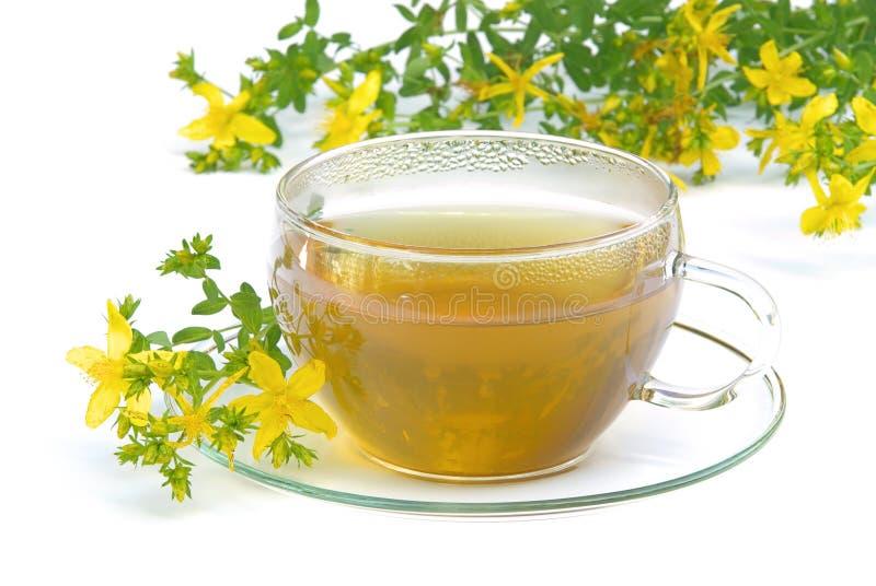 Tea St Johns wort 02. Tisane, tea St Johns wort, Hypericum stock photography