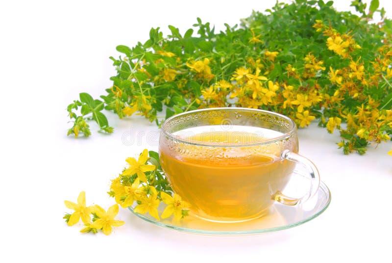 Tea St Johns wort. Herbal tea from St Johns wort plant stock images