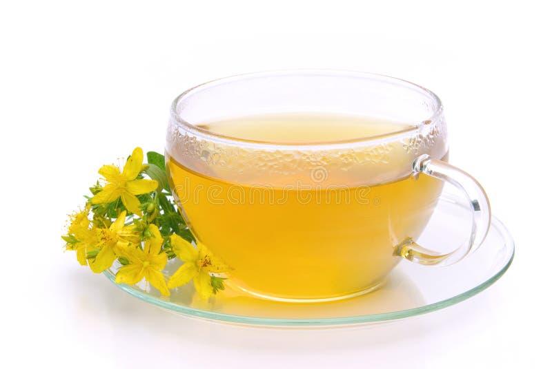 Tea St Johns wort. Tea from herbal St Johns wort plant stock photo