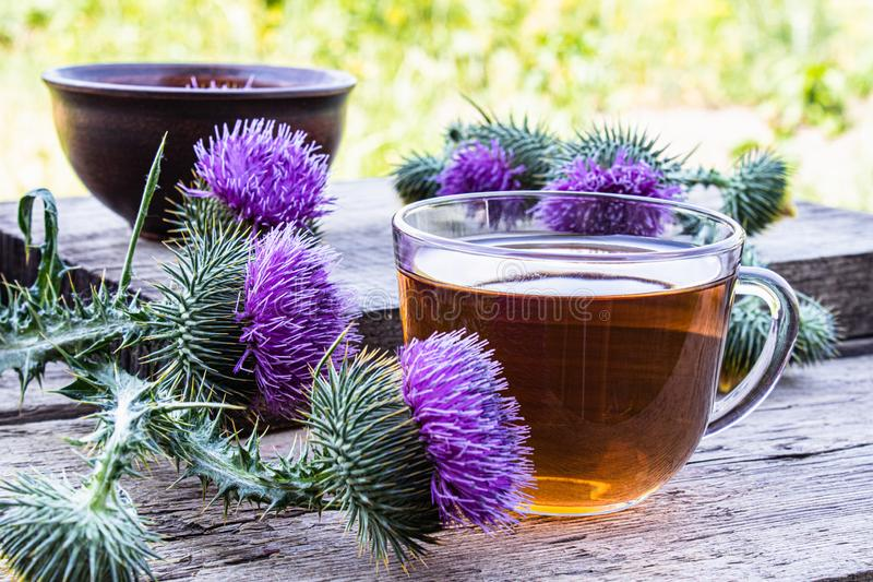 Tea with a thistle and flowers of a thistle medicinal plant on a wooden background. Pink thistle thistle flower. Herbal tea. Healing herbs stock photo